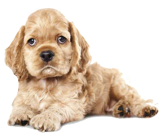 dog allbreeds kennels & cattery